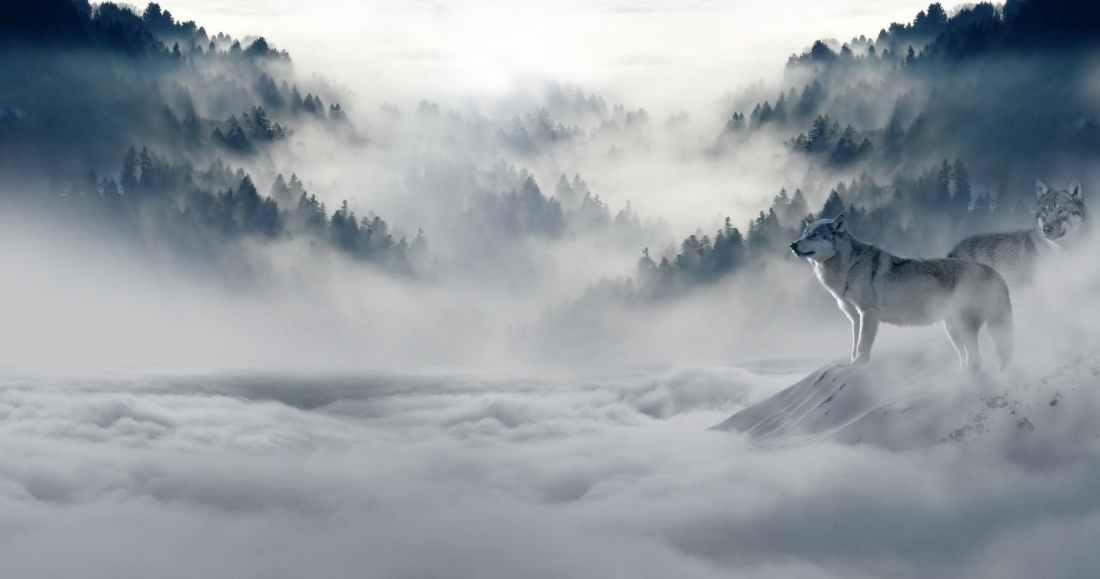 snow nature trees mountain